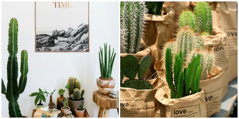 decorar-con-cactus-etoileno5-3