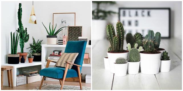 decorar-con-cactus-etoileno5-4