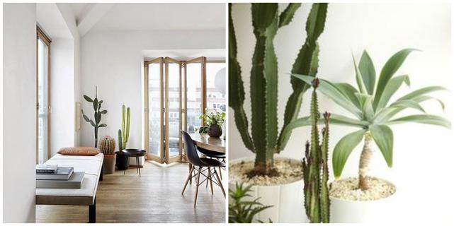 Decorar con cactus for Cactus decoracion