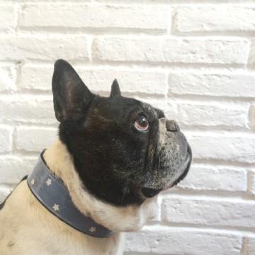 collar-perro-estrellas-azul